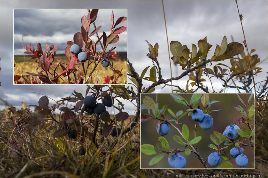 коллаж осенних растений